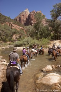 Zion Horseback Riding | Zion Canyon Trail Rides