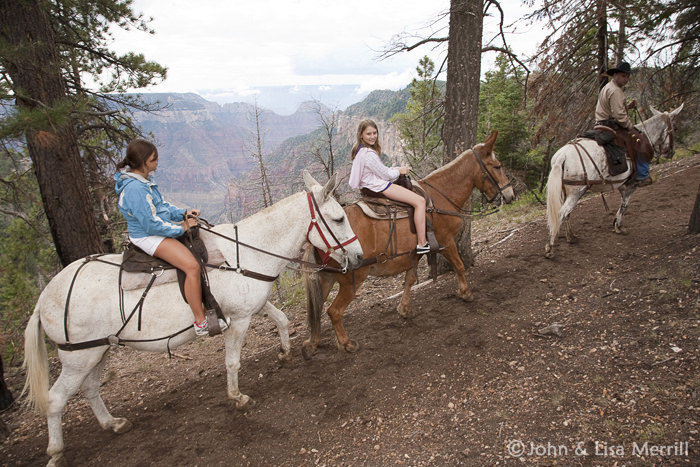 Grand Canyon Trail Rides
